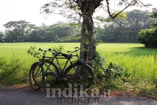 Biciclette lungo la strada