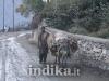 le-strade-del-pakistan-10